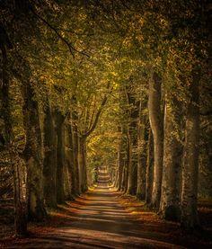 Drummond Castle mile long driveway, Perthshire, Scotland