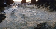 Photo by Sean Corcoran, November November 17, Flora, Coast, Copper, Water, Outdoor, Gripe Water, Outdoors, Plants