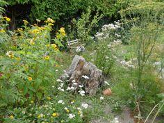 Zu Gast im Hortus Campanularum, dem Garten der Glockenblumen – Hortus Girasole Native Gardens, Plants, Cottage, Gardening, Insects, Insect Hotel, Natural Garden, Cottages, Lawn And Garden