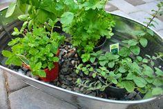 """cute little herb """"garden"""""""