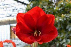 Flor roja y delicada - Con la cámara en la mano