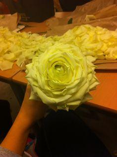 Sydd rose
