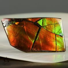 AMMOLITE from the shell of the Ammonite Rare Gem Stone from Canada