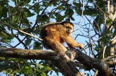 Resultado de imagem para pantanal fauna e flora