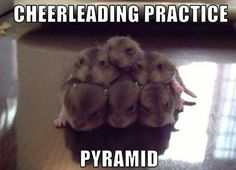 Funny pictures about Hamster pyramid. Oh, and cool pics about Hamster pyramid. Also, Hamster pyramid. Animal Captions, Funny Animals With Captions, Funny Animal Quotes, Funny Captions, Funniest Animals, Animal Sayings, Hilarious Animals, Animal Pics, Animal Fun