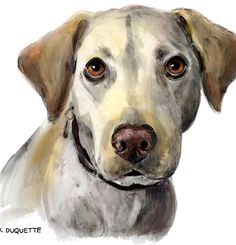 A custom Pet Portrait drawn by Keith DuQuette will give you an exceptional and touching likeness of your pet and also a unique work of art.