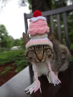 91cf35aa064 My cat would kill me if I tried this! Cat Hat Small Dog Hat The
