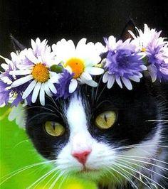 Afbeeldingsresultaten voor Cat with Flower Crown