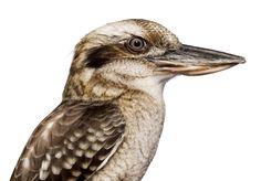 'bird' by andrew zuckerman.