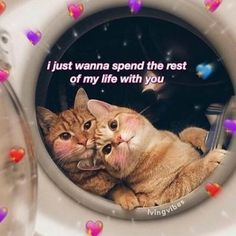 Image may contain: text that says 'ijust wanna spend the rest of my life with you lvingvibes' Cute Cat Memes, Cute Love Memes, Cute Quotes, Funny Memes, Relationship Memes, Cute Relationships, Love You Meme, Couple Memes, Crush Memes