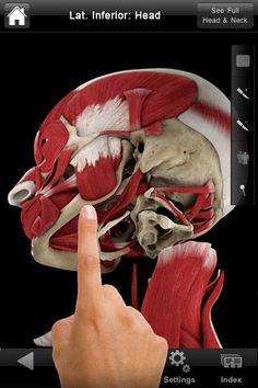 $6.99 in the app store--PERFECT for studying the A of muscles of mastication and speech! Repinned by SOS Inc. Resources.