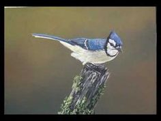 Painting A Blue Jay - YouTube