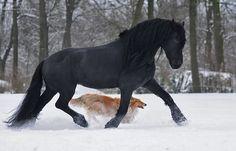 masculine horse