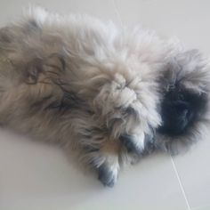How To Remove Mats From A Long Haired Cat A Hairy