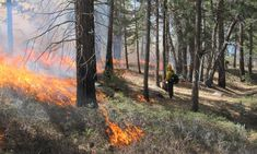 Fiercer, more frequent fires may reduce carbon capture by forests | Trees and forests | The Guardian Forest Ecosystem, Growing Tree, Small Trees, Aerial View, The Guardian, Ecology, Trees To Plant, Climate Change, Forests