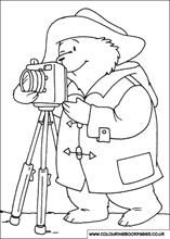 The bear taking photos