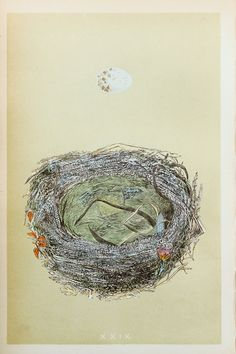 Woodchat Shrike Nest & Eggs Reverend Morris 1800s by PaperPopinjay, $20.00