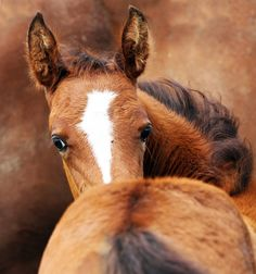 I see you... equine love