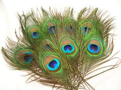 NATURAL Peacock Feather Eyes $6.00