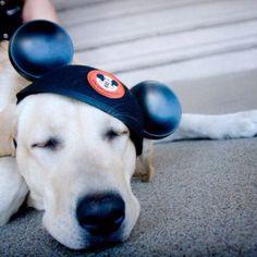 Disney dog @Michelle McNamara