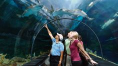 See all your favorite aquatic animals in one place ' SeaWorld Orlando. See interactive shows with killer whales and experience thrilling roller coasters and water rides.