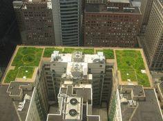 Telhados verdes contribuem para preservação da biodiversidade em áreas urbanas - Ambientalistas em rede