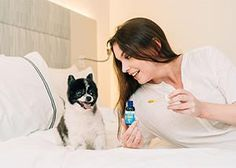 How to Help Your Pet Love Vet Visits | Innovet Pet Agility Training For Dogs, Dog Agility, Cat Fountain, Oils For Dogs, Pet Peeves, Large Dog Breeds, Separation Anxiety, Pet Safe