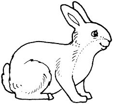 Image result for printable colouring pictures of wild animals