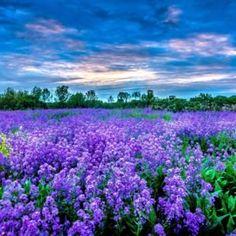 Προσευχή στην Παναγία Γιάτρισσα - ΕΚΚΛΗΣΙΑ ONLINE Beautiful Roses, Beautiful World, Beautiful Places, Beautiful Pictures, All Nature, Science And Nature, Amazing Nature, Colorful Pictures, Nature Pictures