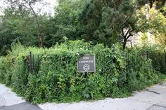 """Time Landscape Garden, New York - """"A tiny corner of Lower Manhattan offers a glimpse of the past. The city park, created by artist Alan Sonfist, features only plants that existed in New York before European colonization, from red cedar trees to Virginia creeper vines to violets. 'It's a park in the form of a time capsule, a memorial to the departed natural landscape."""" -  http://www.usatoday.com/story/travel/destinations/10greatplaces/2014/09/05/hidden-places/15068795/"""