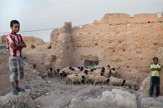Un ragazzino fa da pastore per un gregge di pecore