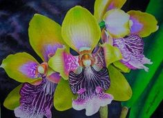odontoglosum (orquidea)