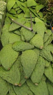 The Spice Doc: Nopales, a Prickly Affair