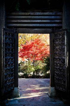 Yamanashi, Japan I Japan Yamanashi, Sea Of Japan, Go To Japan, Travel Around The World, Around The Worlds, Beautiful Places, Beautiful Pictures, Art Asiatique, Island Nations