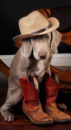 Cowboy dog :D