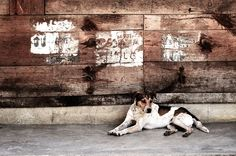 Dog Photography Color Dog Photography by MiTierraEsTuTierra
