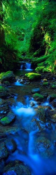 Olympic National Park, Washington, USA   #waterfalls  #breathtaking  #inspiringcarlos