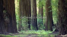 Growing is Forever by Jesse Rosten.