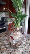 Picture of $8 Betta Fish & Flower Vase