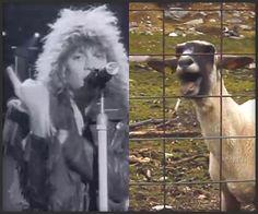 Goats & Bon Jovi - The Awesomer