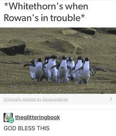 Rowan!<<it might just be me, but seeing this makes me think Rowan is the baby of the Whitethorn family.