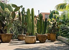 No paisagismo, também há plantas mais duráveis. Os cactos, por exemplo, resistem a condições extremas, como luminosidade direta e pouca água. Projeto de Rodrigo Oliveira (Foto: Gui Morelli/Divulgação)