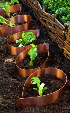 Copper plant collars