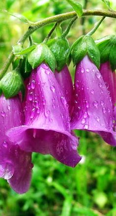 Flowers That Look Like Bells