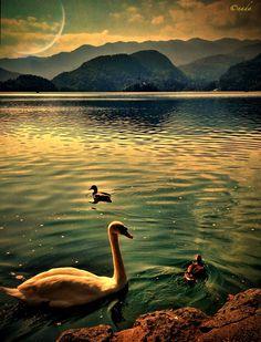 Lake Bled Slovenia by Nada Leva, via 500px