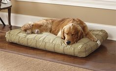 Just found this Chew Resistant Dog Beds - ToughChew%26%23174%3b Dog Bed -- Orvis on Orvis.com!