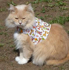 Pet Harness Summer Fun by ScotsPlace on Etsy, $18.00