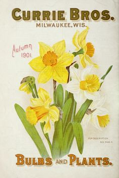 1901 - Bulbs and plants : - Biodiversity Heritage Library. #BHLinbloom