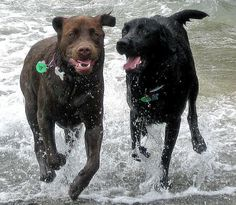 These will be my dogs one day once my brown puppy grows up<3