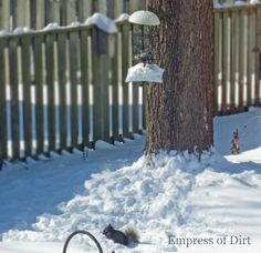 Two dollar solution keeps squirrels off hanging bird feeders